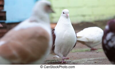 Pigeons in front of camera