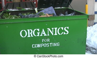 Pigeons in Organics bin.