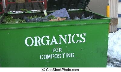 Pigeons in Organics bin. - Pigeons feasting on bread thrown...