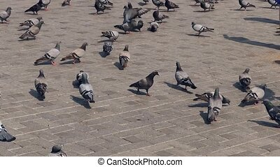 pigeons in the park and children chasing them,