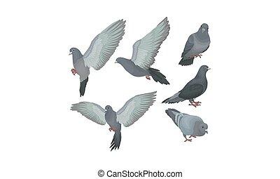 pigeons, mouvements, illustration, vecteur, bleuâtre, gris, ensemble