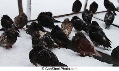 pigeons, neigeux, surgelé, séance, déchets ménagers, boîte, lot
