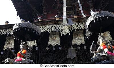 pigeons., nepal.