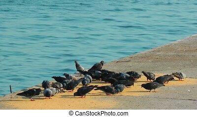 pigeons, oiseau, animal