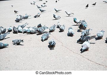 Pigeons on a city street