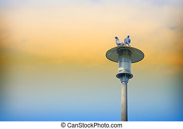 Pigeons on a lamp post