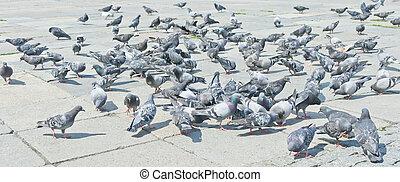 Pigeons on city street