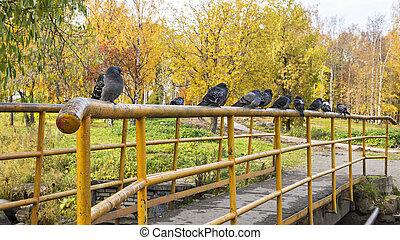 Pigeons on railing of the bridge