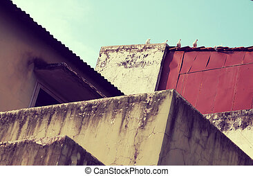 pigeons on roof, amazing shape from curves of architect from antique wall