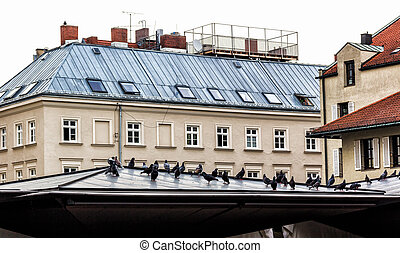 Pigeons on Roof in Munich. Germany