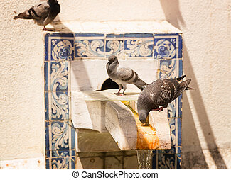 Pigeons on the fontain