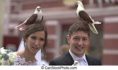 Pigeons on the head groom and bride
