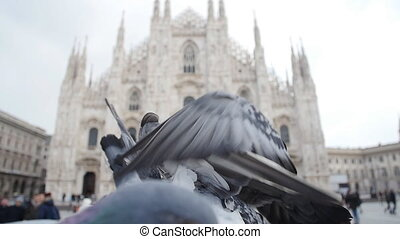 Pigeons on the old square in Europe - Pigeons on the Duomo...