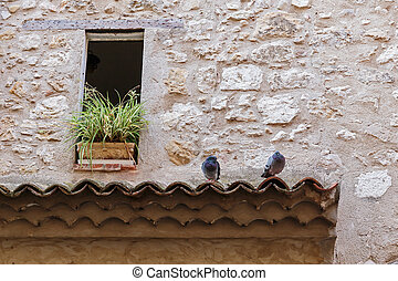 pigeons on the roof tile