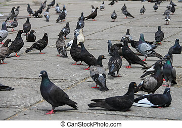 Pigeons on the square in the city park