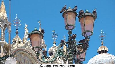 pigeons, rue, lanterne, dans, venise