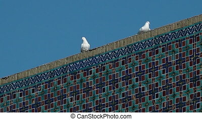 pigeons standing on a colourful wall - A hand held, close up...