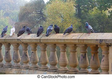 Pigeons standing on wall