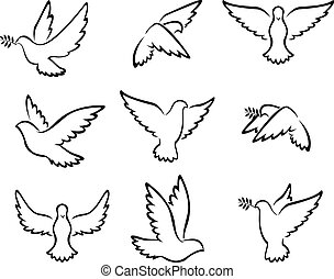 pigeons tattoo collection