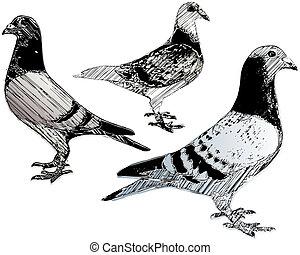 pigeons trio - sketching of the pigeons