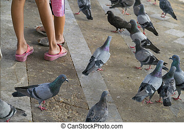 Pigeons walking on the floor and baby legs.