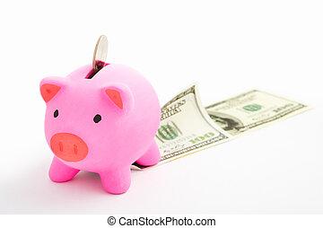 Piggy bank and dollar