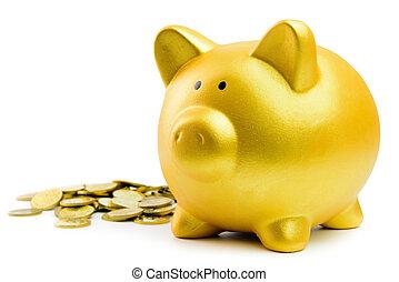 piggy bank, i, monety