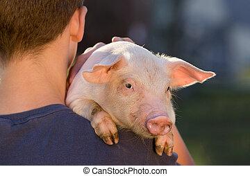 Piglet on man's shoulder - Young farmer holding cute piglet...