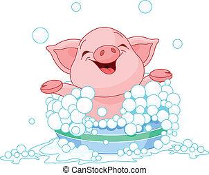 Piglet taking a bath - Cute Piglet taking a bath
