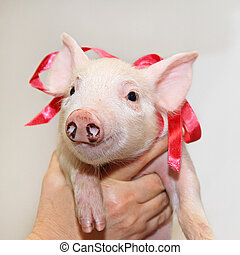 Piglet with bow