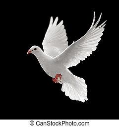 pigoen, летающий