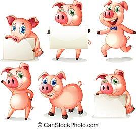 Pigs holding blank boards illustration