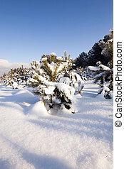 pijnboom bomen, in, winter