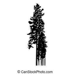 pijnboom bomen, weinig