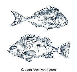 Pike and Common European Perch Fish Sketch Poster