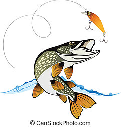 Pike and fishing lure with water splash isolated on a white background, colored illustration