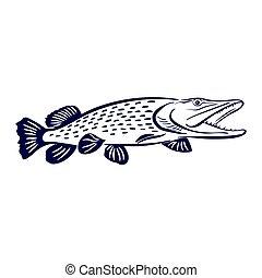 pike fish illustration - Isolated illustration of big pike...