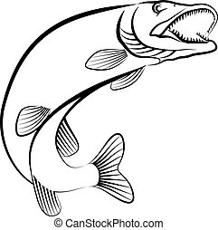 pike fish - line art illustration