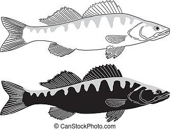 pike, peixe, -, poleiro