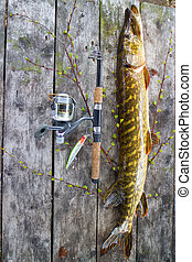 pike super catch on spinning - pike fishing big Northern...