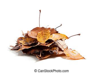 pila, hojas, blanco, otoño