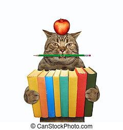 pila, libri, prese, 3, gatto
