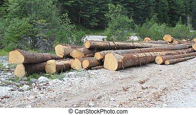 pilas, de, picea, troncos, en, bosque