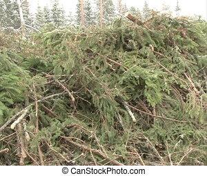 pile fir tree branch