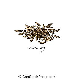 Pile, heap of dried caraway, cumin seeds with caption, sketch style vector illustration isolated on white background. Hand drawn pile of caraway, cumin or fennel seeds