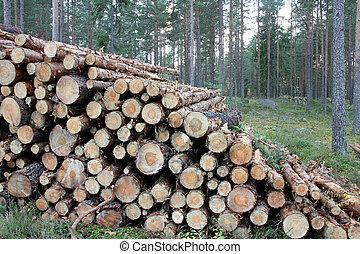 pile, journaux bord, forêt pin