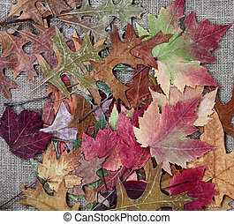 Pile of Autumn leaves for the season