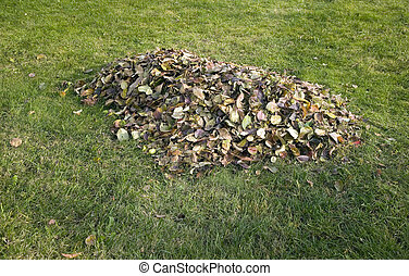 Pile of autumn leaves placed on grass