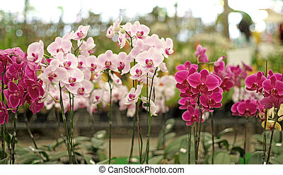 beautiful orchid flower - pile of beautiful orchid flower in...
