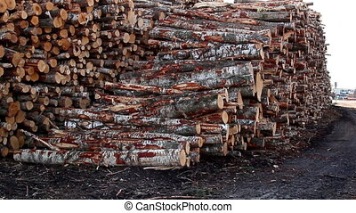 Pile of big logs on the ground